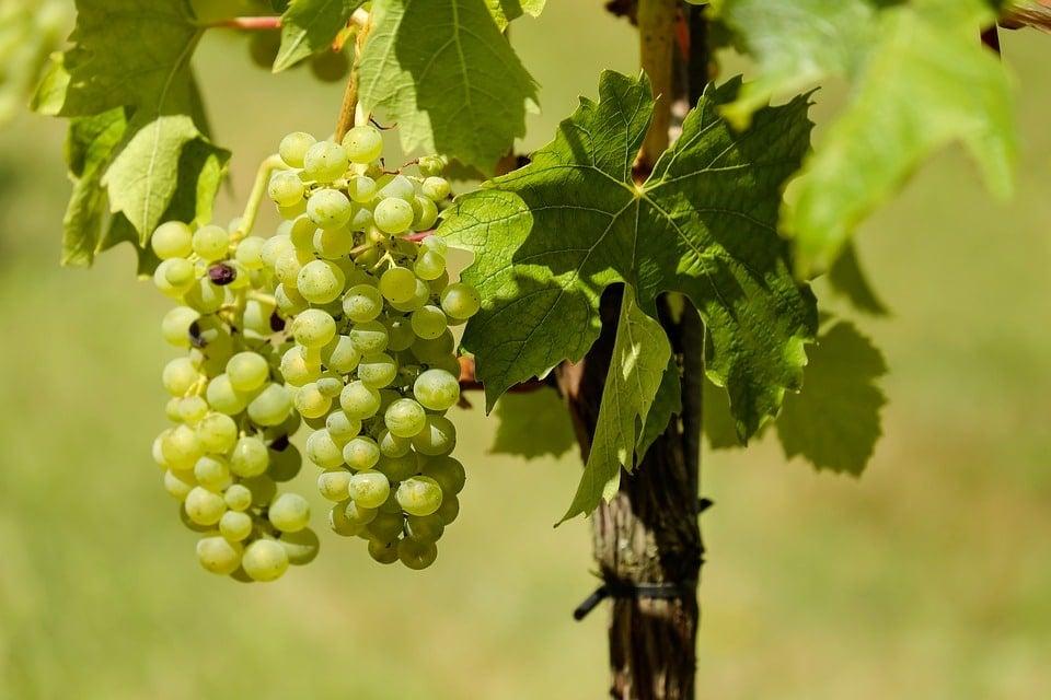 meilleurs vins de Bordeaux
